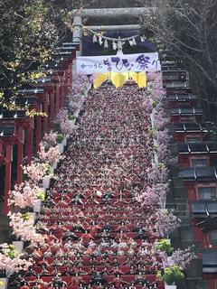 春の写真・画像素材[366486]