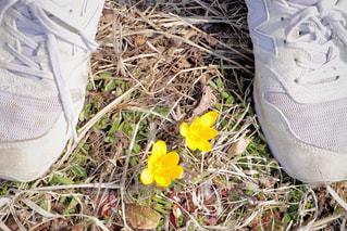 花の写真・画像素材[403994]