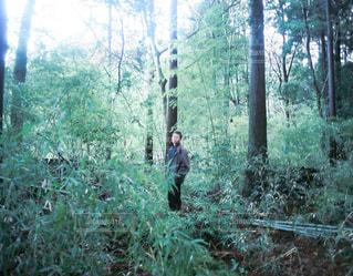 森林の写真・画像素材[457770]