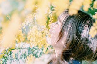 近くの花のアップの写真・画像素材[710460]