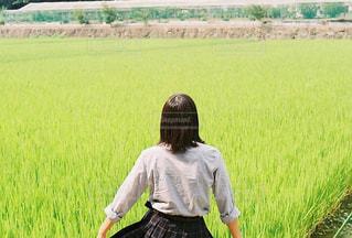 緑の野原の写真・画像素材[1430251]