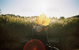 落ち葉の写真・画像素材[1604386]