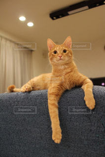 猫 - No.326553