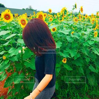 ひまわり畑の写真・画像素材[677397]