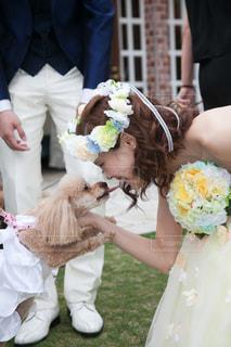 愛犬とのひとときの写真・画像素材[798553]