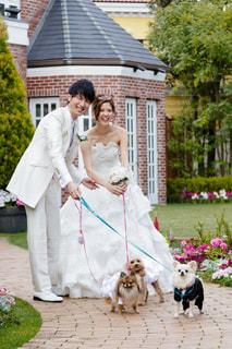 愛犬と結婚式の写真・画像素材[1232039]
