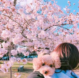 桜 - No.458090
