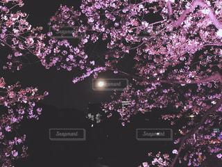 空に花火 - No.1124362
