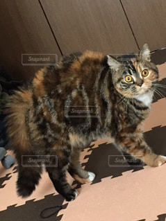猫の写真・画像素材[319135]