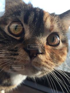 猫の写真・画像素材[319136]