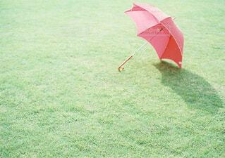 芝生の上の傘のクローズアップの写真・画像素材[4585202]