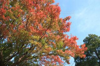 自然,空,公園,秋,紅葉,屋外