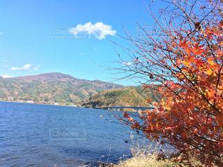 河口湖大橋と紅葉の写真・画像素材[858860]