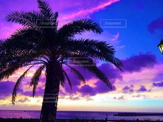 日没の前にヤシの木の写真・画像素材[897095]