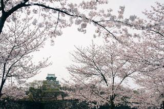 花の写真・画像素材[367945]