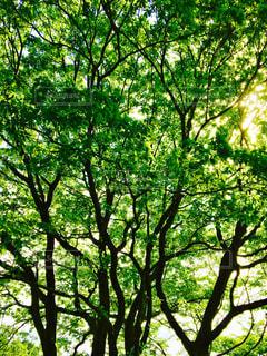 木の写真・画像素材[463163]