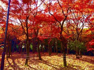 公園の写真・画像素材[557767]