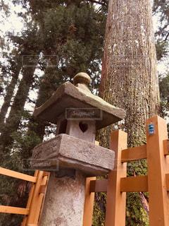 木の隣に座っている木製のベンチの写真・画像素材[1149033]