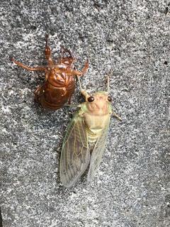 地上で昆虫の写真・画像素材[1379218]