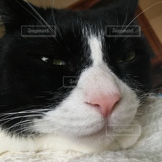 猫 - No.15732