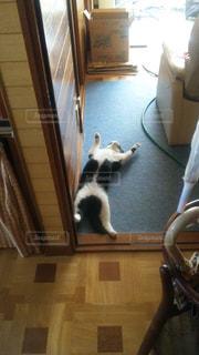 猫の写真・画像素材[240212]