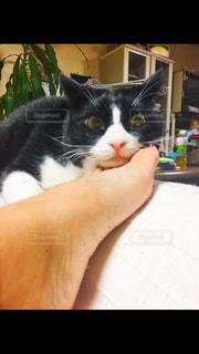 猫の写真・画像素材[315031]