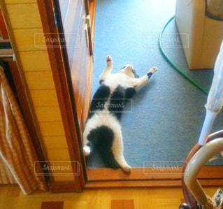 猫の写真・画像素材[699397]