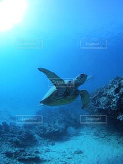 水の下で泳ぐ海亀の写真・画像素材[1314717]