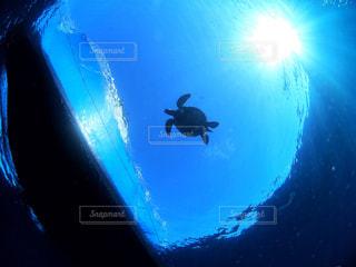 青いプールの水の写真・画像素材[1385307]