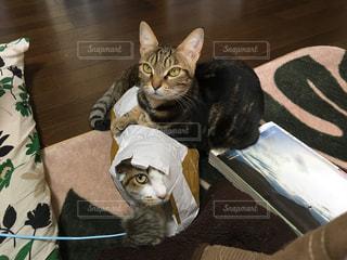 猫,かわいい,cat,ツーショット