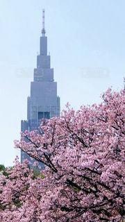 空,花,春,桜,屋外,タワー,樹木,新宿