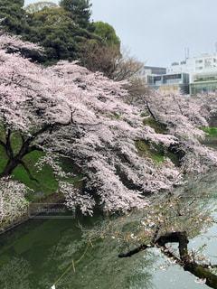 花,春,桜,水面,樹木,堀,草木