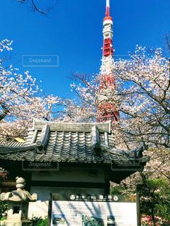 風景,空,花,桜,屋外,樹木