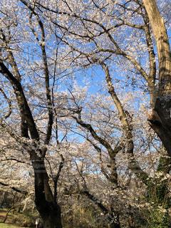空,公園,花,春,桜,屋外,樹木,草木