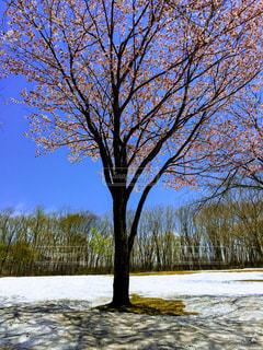 自然,風景,空,桜,森林,雪,屋外,湖,景色,樹木,草木,日中