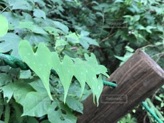 自然,森林,葉っぱ,景色,トレッキング,ハート,山ガール
