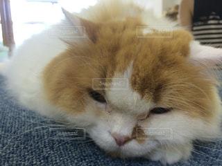 近くに猫のアップの写真・画像素材[1334358]
