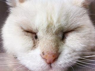 猫,白,寝顔,子猫,ホワイト,佐久島,ネコ,ノラネコ,ホワイトカラー