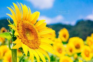 夏の太陽の写真・画像素材[1827095]