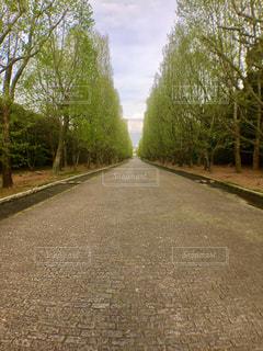 公園の写真・画像素材[454376]
