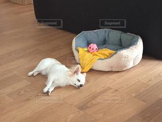 犬の写真・画像素材[479841]