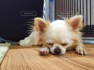 犬の写真・画像素材[479842]