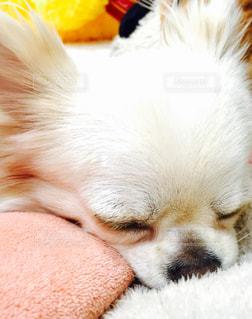 近くに犬のアップの写真・画像素材[973618]