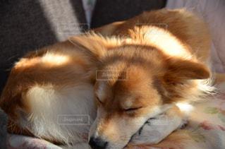 犬,昼寝,日向ぼっこ,雑種,日向