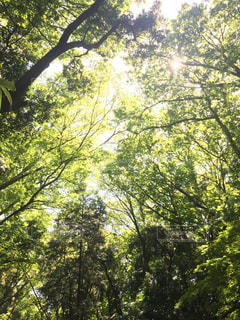 森林の写真・画像素材[465909]