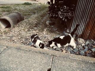 野良猫の親子の写真・画像素材[2916936]