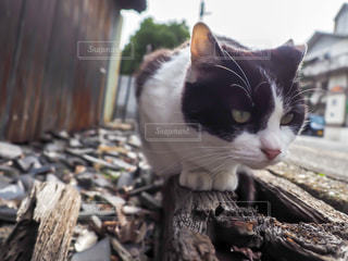 猫,動物,屋外,白,黒,ペット,人物,野良猫,ハチワレ,ネコ,覗き込む,人懐っこい,猫の日,2月22日