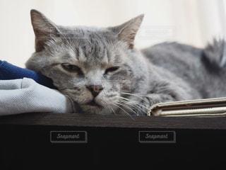 猫,動物,屋内,かわいい,ペット,人物,可愛い,グレー,寝てる,オス,キティ,ネコ,いい顔,サバトラ,猫の日,ネコ科の動物,2月22日