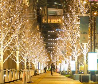 男性,友だち,1人,夜,自転車,屋外,綺麗,樹木,イルミネーション,照明,明るい,グランフロント,シャンパンゴールド