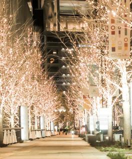 冬,屋外,綺麗,樹木,イルミネーション,灯り,照明,明るい,グランフロント,シャンパンゴールド